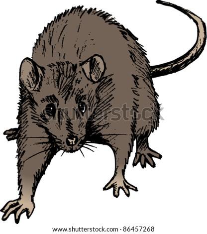 Rat - stock vector