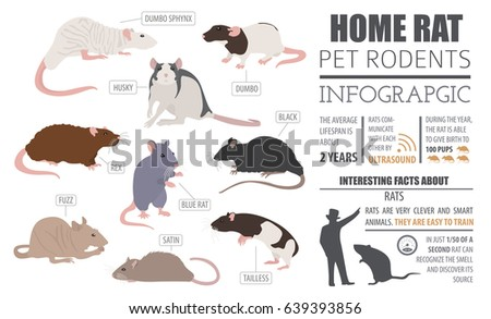 Rats And Mice Stock Images Royalty Free Images Amp Vectors