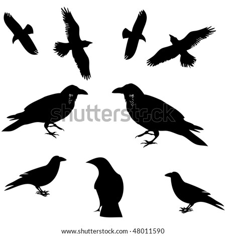 Raven, crow and other bird silhouette vector - stock vector
