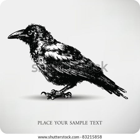 Raven Hand drawn high quality vector - stock vector