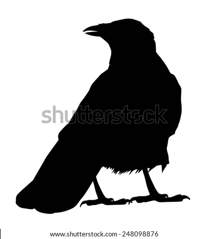 Raven vector silhouette - stock vector