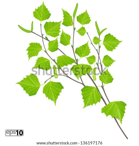 Realistic branch of birch with green leaves and aments