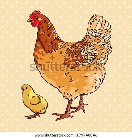 Realistic broody chicken and baby chick, isolated - stock vector