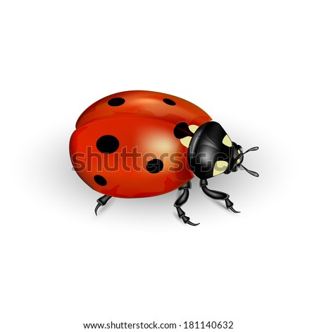 Realistic ladybug isolated on a white background, illustration.