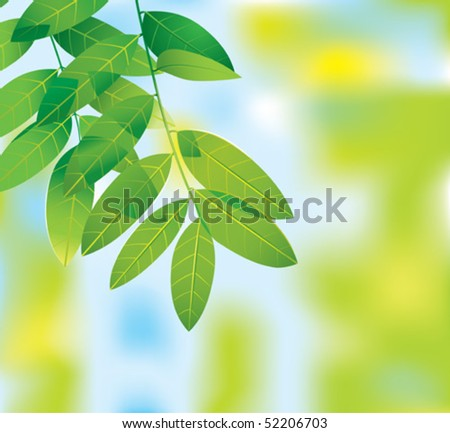 realistic leaves - stock vector