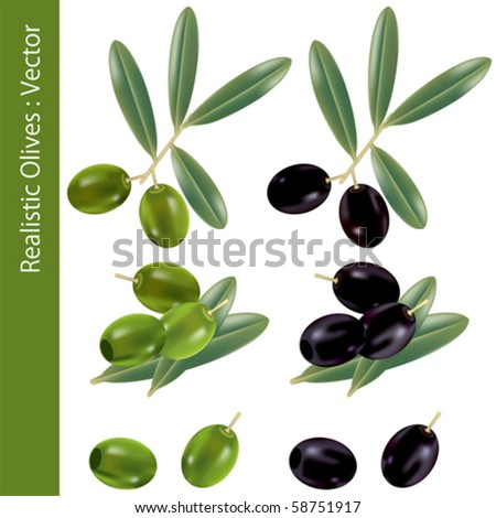 Realistic Olives. Illustration vector.
