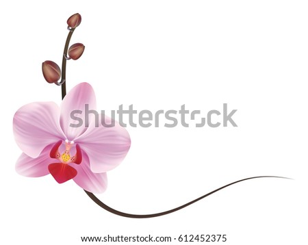 Realistic Orchid Frame Stock Vector 612452375 - Shutterstock