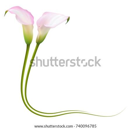 Realistic Pink Calla Lily Frame Corner Stock Vector 740096785 ...