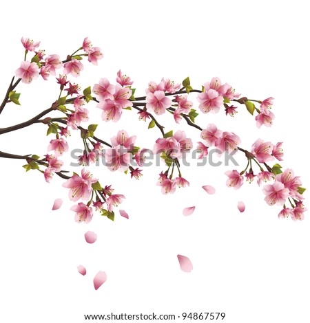 Realistic sakura blossom - Japanese cherry tree with flying petals isolated on white background - stock vector