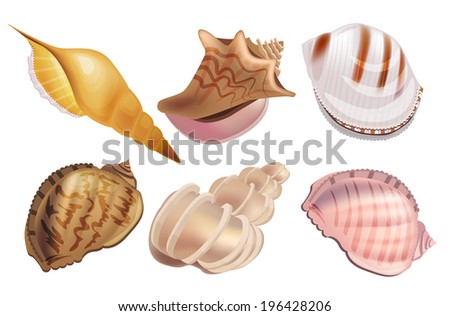 Realistic set with sea shells and pearls. Part 2. - stock vector
