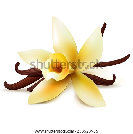 Realistic vanilla flower and pods, vector isolated objects on white background - stock vector