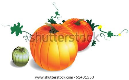 Realistic vector illustration of pumpkins - stock vector