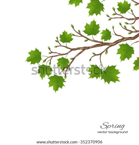 Realistic vector silhouette spring tree  for your design on  the white background. Vintage hand drawn illustration with space for text - stock vector