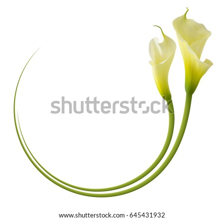 Realistic Yellow Calla Lily Frame Symbol Stock Vector 645431932