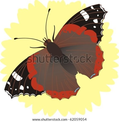 Red admiral butterfly drawing