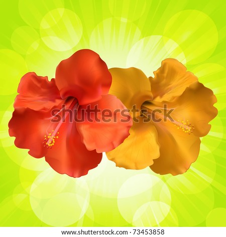 Red and orange vector hibiscus flowers on a glowing green background - stock vector