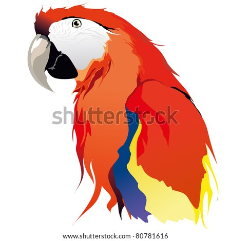 red blue Macaw parrot - stock vector