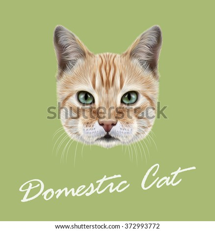 Red Cat. Vector Illustrated Portrait of Domestic Cat on green background. - stock vector