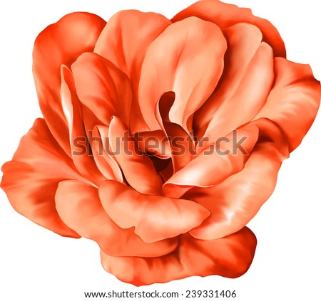 Red Flower isolated on white background. Vector illustration - stock vector