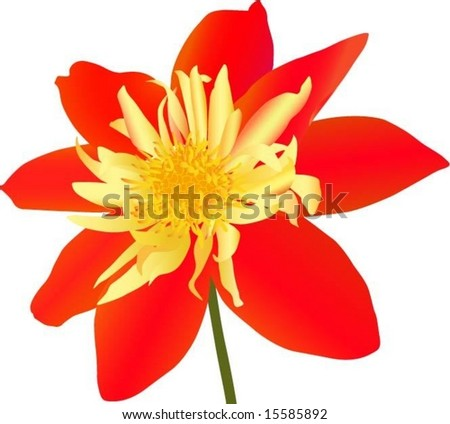 Red flower isolated on white (vector illustration)