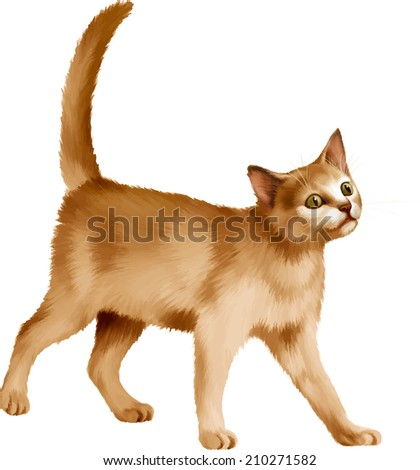 Red kitten walks against white background, British kitten