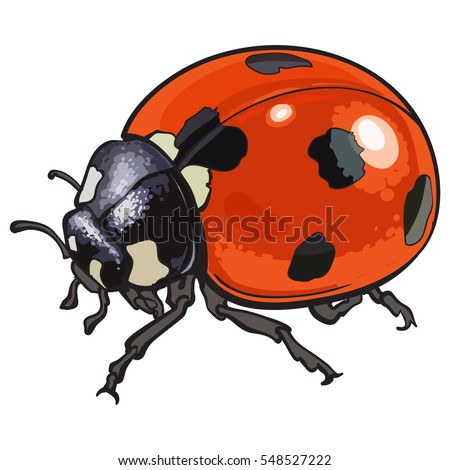 Realistic ladybug drawing - photo#8