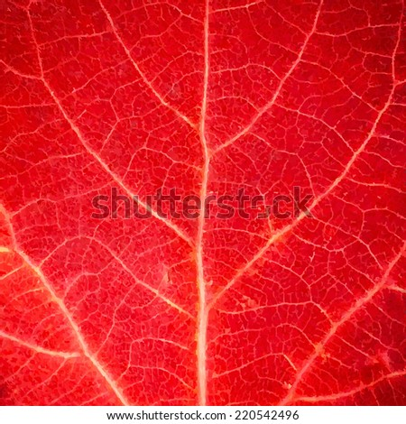 Red Leaf Texture, Vector Illustration - stock vector