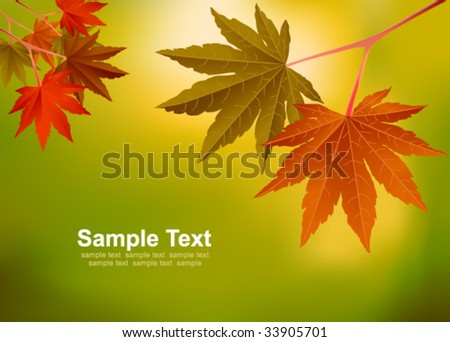red maple leaves.vector - stock vector