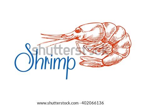 Red marine shrimp or prawn sketch in vintage engraving style. May be use in seafood menu or recipe book design - stock vector
