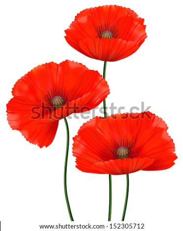 Red poppies isolated on a white background  - stock vector