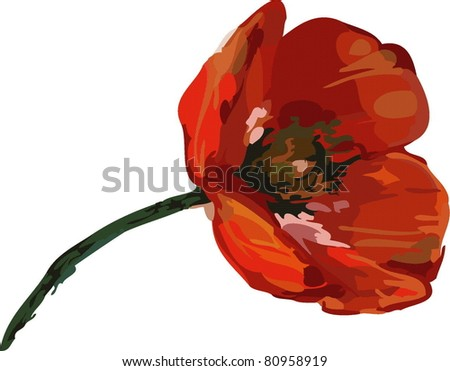 red poppies on a long stalk