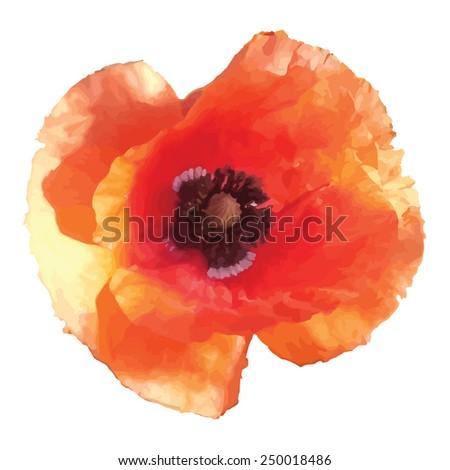 Red poppy flower isolated on white background - stock vector