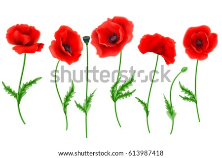 Red poppy flower isolated on white stock vector 613987418 shutterstock red poppy flower isolated on white background vector illustration mightylinksfo