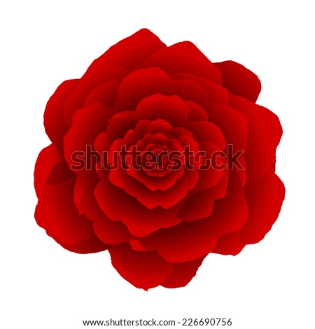Red rose flower isolated on white.  - stock vector