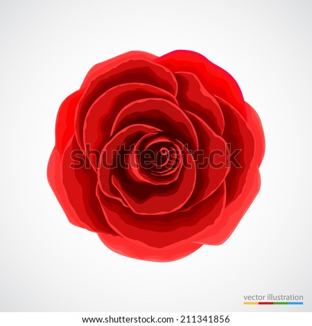Red rose on white background. Vector illustration. - stock vector