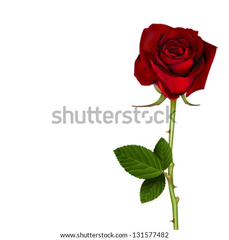 Red Rose, vector - stock vector