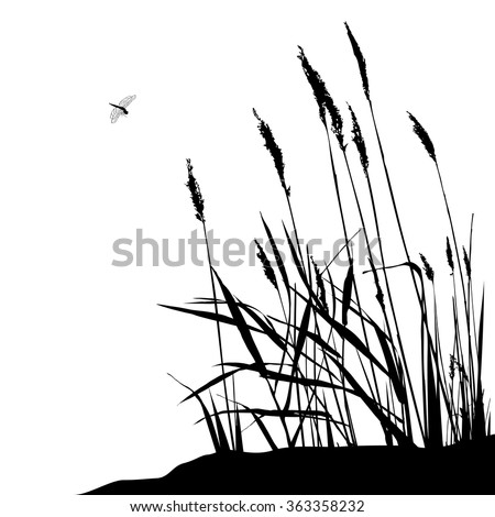 Reed and flying dragonfly during sunny day - vector illustration, black and white. Wild live - stock vector