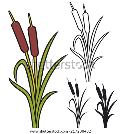 reeds (vector illustration of bulrush, bullrushes and grass) - stock vector