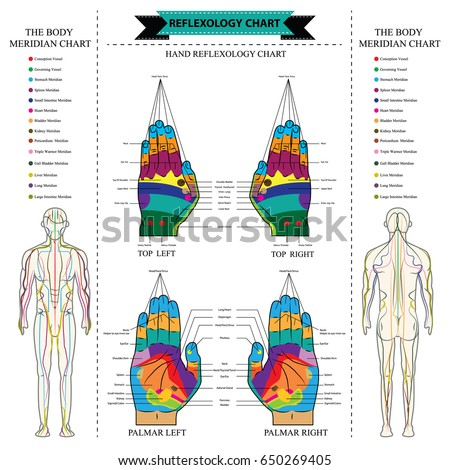 Reflexology chart body anatomy head toe vectores en stock 650269405 reflexology chart of body anatomy from head to toe and hands linking with description of the malvernweather Choice Image