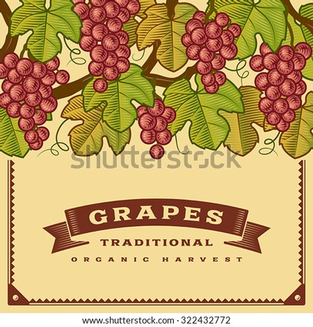 Retro grapes harvest card. Editable vector illustration with clipping mask.