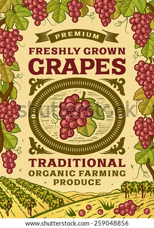 Retro grapes poster. Fully editable vector illustration with clipping mask.