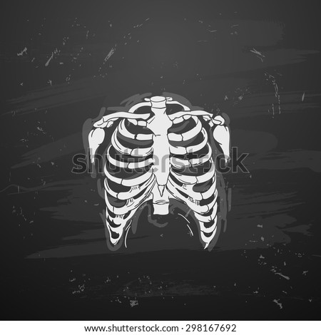 Rib Cage on blackboard - stock vector