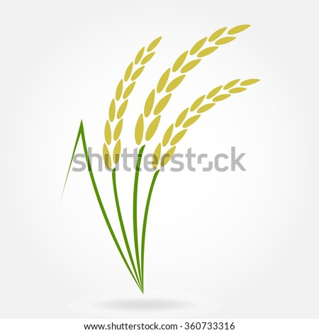 Rice. Crop symbol. Rice or Wheat ears design element. Agriculture grain. Colorful vector illustration. - stock vector
