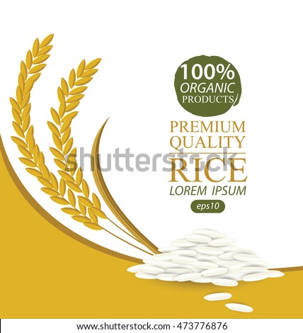Rice. Vector illustration.
