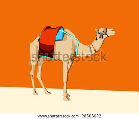 richly dressed camel  whit saddle and cover on the back
