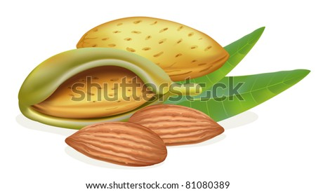 Ripe almonds with leaves. Vector illustration on white background.