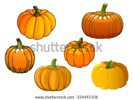 Ripe autumnal orange pumpkin vegetables with broad rounded sides isolated on white background. For agriculture harvest or Halloween party design - stock vector