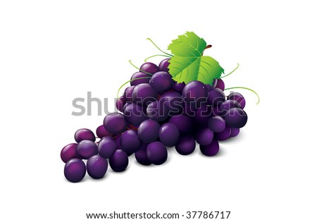 ripe grape - stock vector
