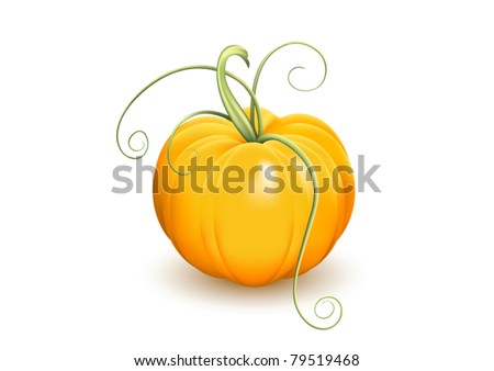 Ripe pumpkin with tendrils isolated on white background, vector illustration. Raster version available in my portfolio - stock vector