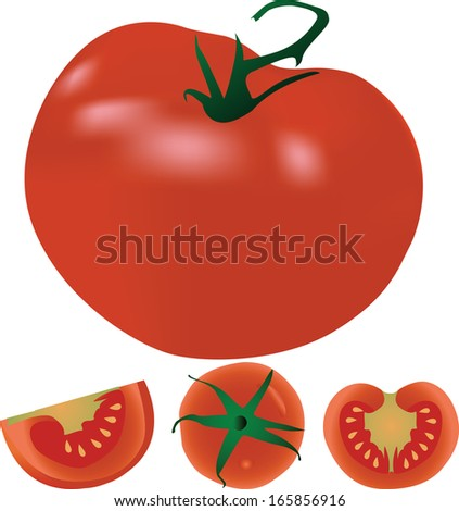 ripe red tomato vector illustration isolated on white  - stock vector